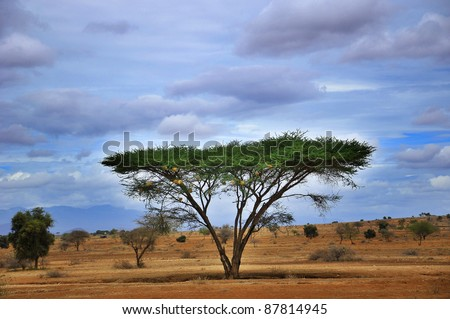 A view over an African plain in Kenya. Amboseli Natural Park. - stock photo