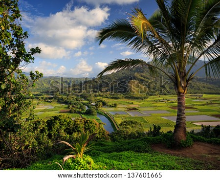 A view overlooking traditional taro fields on the Hawaiian Island of Kauai - stock photo