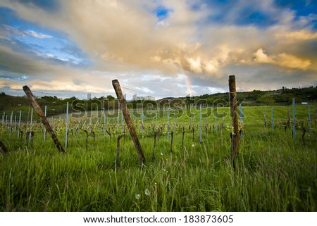 A vineyard during one of southern Europe's most beautiful sunsets. - stock photo