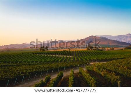 A vineyard in Santa Ynez, California. - stock photo