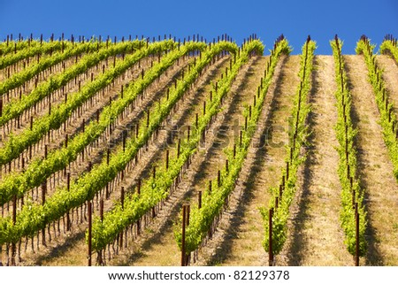 A vineyard in southern California.