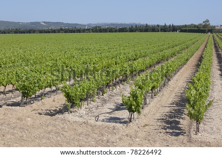 A Vineyard in spring in southern France - stock photo