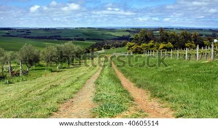 A vineyard in Victoria, Australia - stock photo