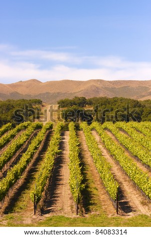 A vineyard near Paso Robles in southern California. - stock photo