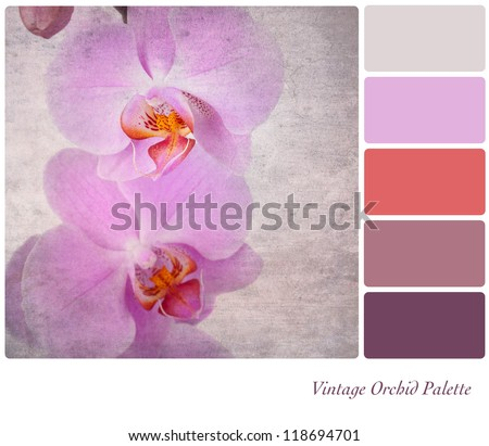 A vintage effect, delicate pink orchid with complimentary colour palette - stock photo