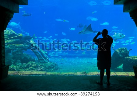 A visitor snap a picture in aquarium, in the caribbean. - stock photo
