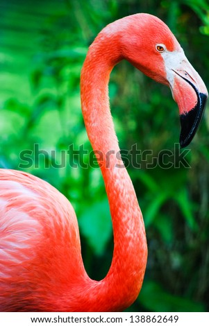 A vivid closeup shot of a gorgeous pink flamingo
