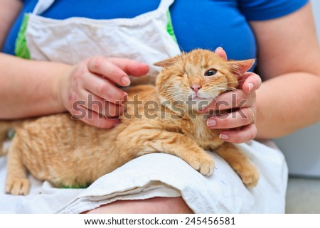 A volunteer taking care of a two months old one eyed, sick kitten in a cat refugee - stock photo
