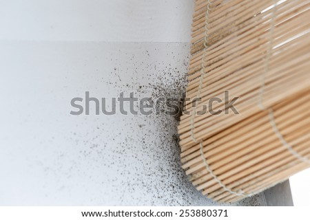 A wall with harmful, spreading black mold  around the blinds - stock photo
