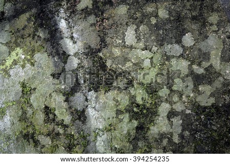 a wall with moss and mould - stock photo