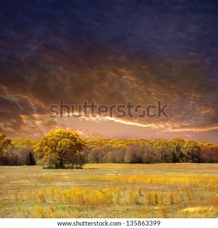 A warm spring landscape. - stock photo