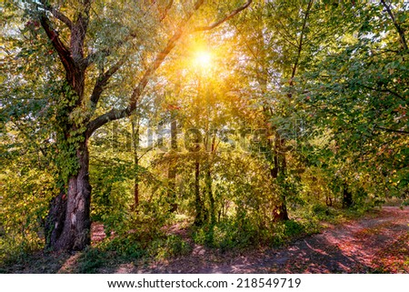 A warm sun illuminates the forest through the tree branches in autumn - stock photo