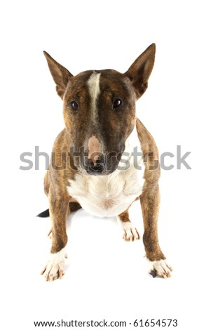 A watch dog isolated on a white background - stock photo