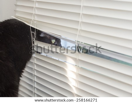 A watchful black cat peeks through window blinds, alert for intruders. - stock photo