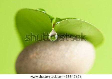 A water drop drip from a green leaf lying on stones - stock photo