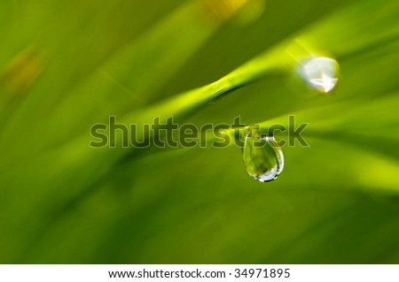 A water drop on a blade of grass