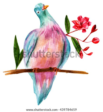 A watercolor drawing of a pigeon, sitting on a branch of a rhododendron bush with blooming red flowers and leaves; a romantic Victorian style illustration, hand painted on white background - stock photo