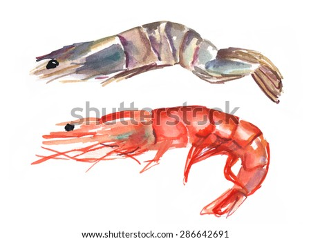 A watercolour drawing of two shrimps, one pink and one tiger, on white background - stock photo