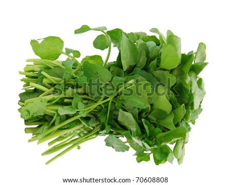 A watercress bunch - stock photo
