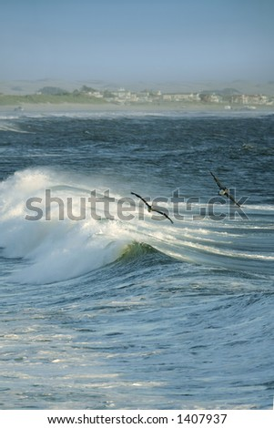 A wave crashes and pelicans skim the water on the central California shore near Pismo Beach - stock photo