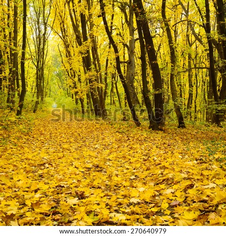 A way through the autumn forest of park with lots of fallen leaves and trees still yellow - stock photo
