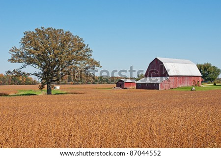 A weathered old red barn and outbuilding surrounded by fields of bright orange colored crops with a large single tree and background trees showing the bright colors of autumn - stock photo