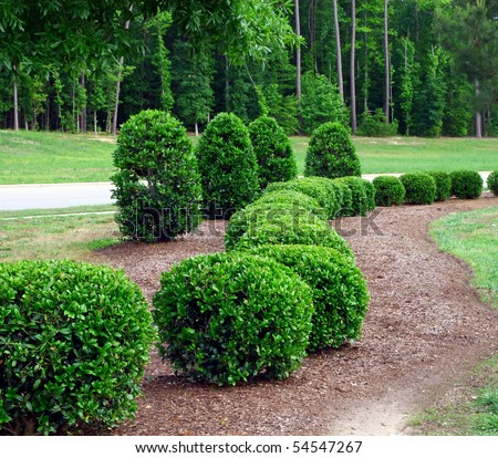 a well landscaped and manicured hedge of bushes with mulch and grass in a curved pattern. - stock photo