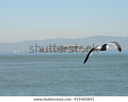 A Western seagull flies in front of Alcatraz Federal Penitentiary, Alcatraz Island, San Francisco, California  - stock photo