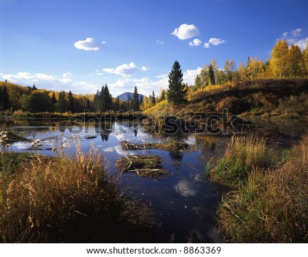 A wetland area in the Gunnison National Forest of Colorado. - stock photo