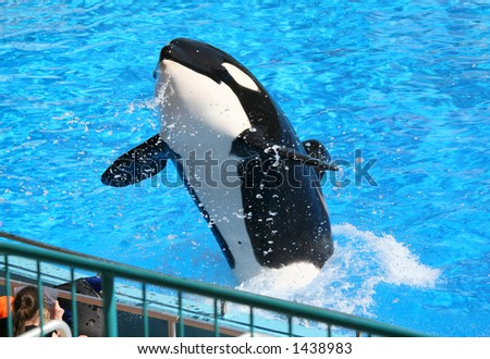 A whale at the zoo splashing the visitors - stock photo