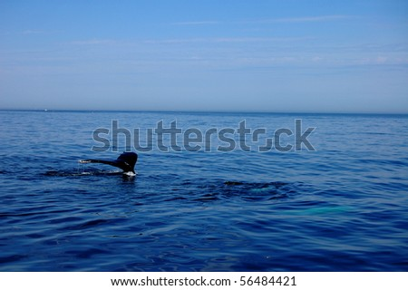 A whale dives below the water's surface off of Cape Cod, MA - stock photo
