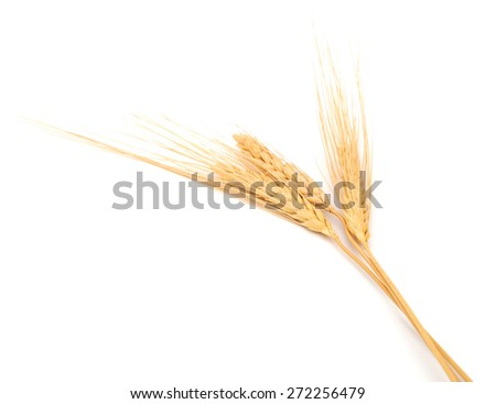 A wheat rye on white - stock photo