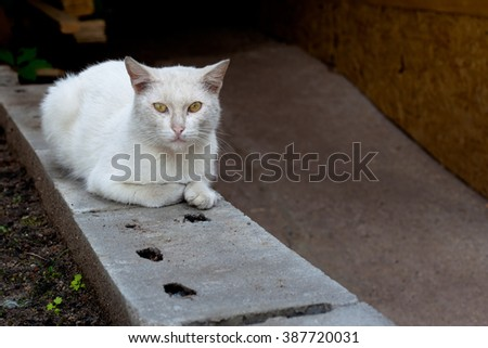 A white cat sitting on grey block