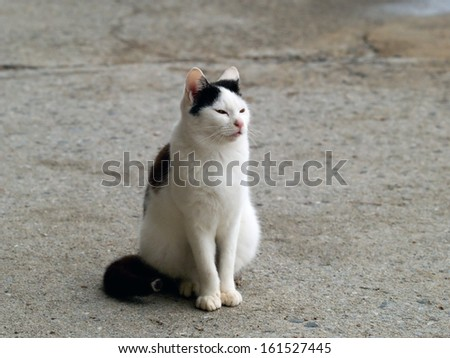 A white cat with black markings sitting outside. - stock photo