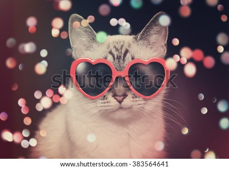 A white cute cat with red heart sunglasses is on a black background with colorful sparkles around the pet for a party or celebration concept. - stock photo
