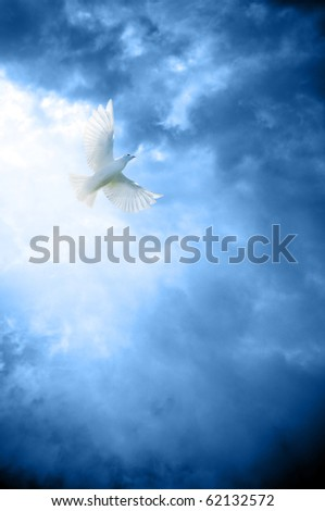 a white dove symbol of peace in heavenly sky - stock photo