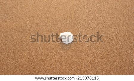 A white fan shaped seashell, nestled into the center of grainy sand  - stock photo