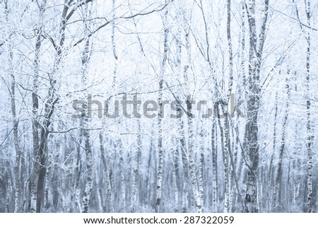 A white forest in the winter with trees in the background