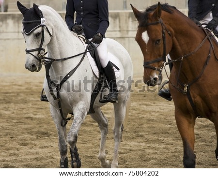 A white-gray colored horse in a field - stock photo