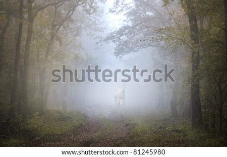A white horse stands in the foggy forest,mystic picture