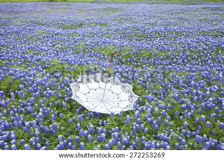 A white lace parasol sits upside down in a field of Texas bluebonnets - stock photo