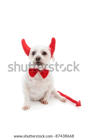 A white maltese terrier dog showing teeth and wearing red devil horns,red bow tie and with a red pointy tail.  White background.