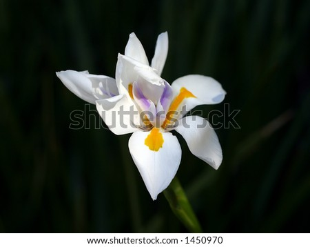 A white orchid - stock photo