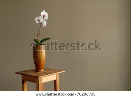 A white orchid photographed against a brown wall in a yoga studio.