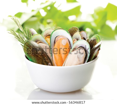 A white plate of New Zealand mussels with a white background