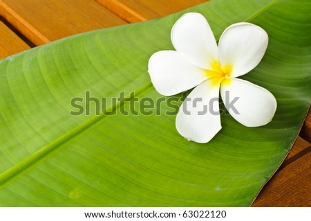 A white plumeria on a green leaf on top of a wooden table - stock photo