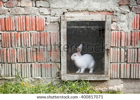 A white rabbit in a farm cage in the countryside.