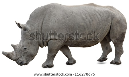 A white rhino on a white background yet visible - stock photo