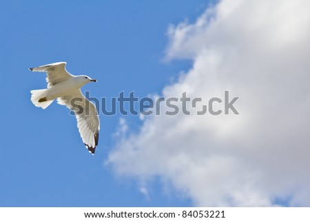 A white seagull flying up in the air on a clear sunny day with clouds in the background - stock photo