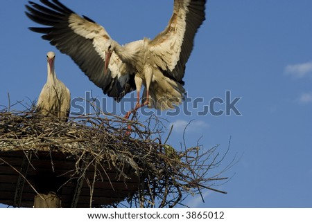a white stork in his nest